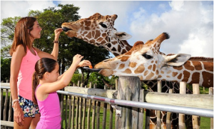 groupon_miami_zoo_deal