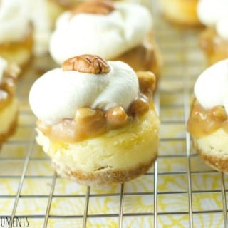 Pecan Praline Mini Cheesecakes - this is the best cheesecake recipe ever! these vanilla cheesecake bites are topped with pecan praline and chantilly cream.