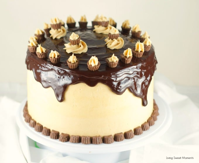 Cheesecake Cake - This is amazing cake features 2 chocolate cakes ...