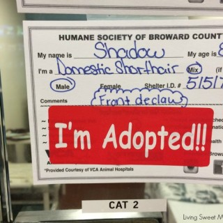 Mickey's Adoption Story - Check out how our lives changed for the better when we adopted a senior cat from the shelter. Please adopt and don't shop.