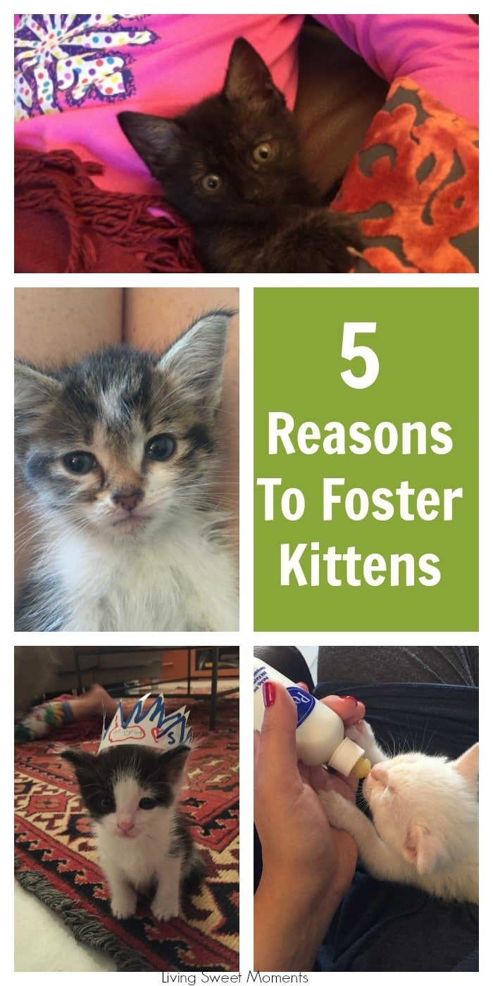 Here are my top 5 reasons to foster kittens. I've done it many times and have found it to be an amazing experience, not only for the kittens but me as well.