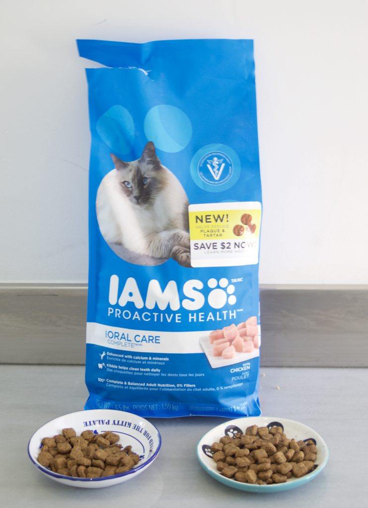 Here are my top 5 reasons to foster kittens. I've done it many times and have found it to be an amazing experience, not only for the kittens but me as well. IAMS PROACTIVE HEALTH ORAL CARE